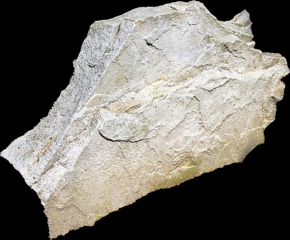 La gaize est une roche d'origine sédimentaire siliceuse formée en terrain argileux.