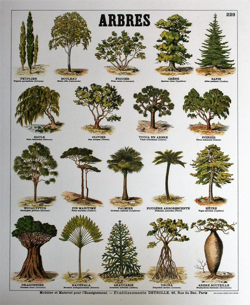 Les lieux-dits de La Romagne peuvent tirer leurs noms d'arbres, comme le Grand Poirier ou le Gros Faux (hêtre).