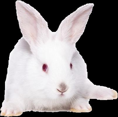 L'animal aux longues oreilles entre dans plusieurs recettes traditionnelles du terroir ardennais (tourtes, pâtés de croûte, civets).  Pâté de lapin ardennais