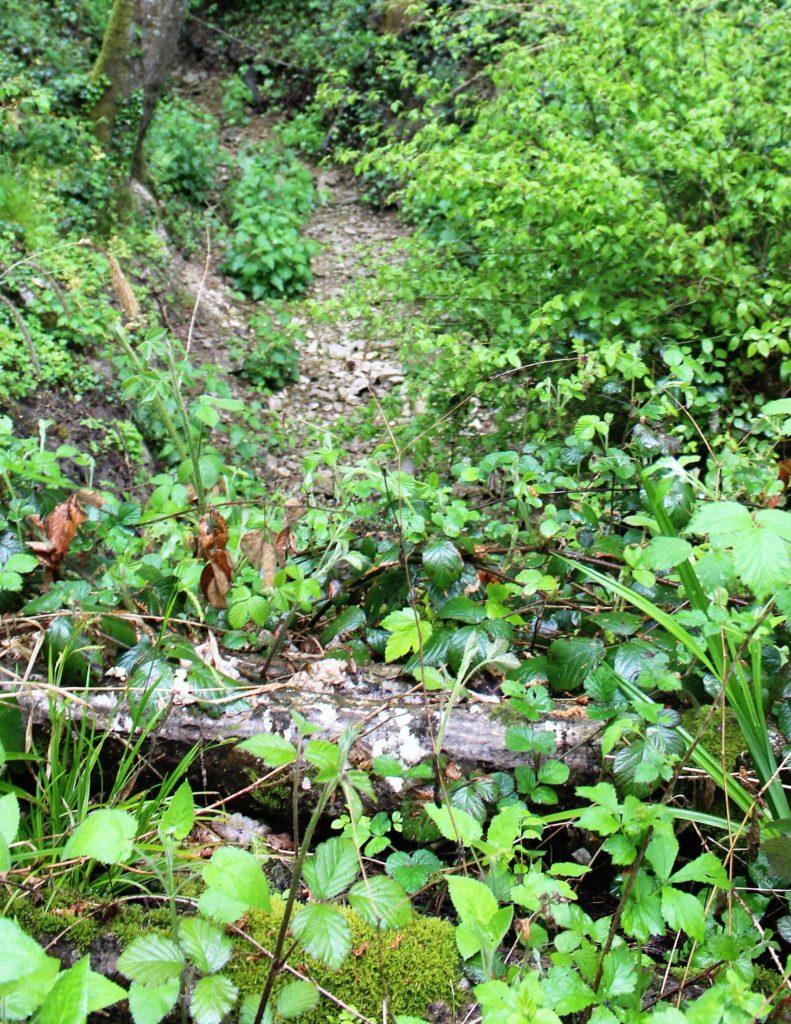 Ruisseau de la Fontaine aux Pous, repérage topographique des environs de La Romagne effectué le samedi 10 avril 2010. Crédits photographiques : © 2020 laromagne.info par Marie-Noëlle ESTIEZ BONHOMME.