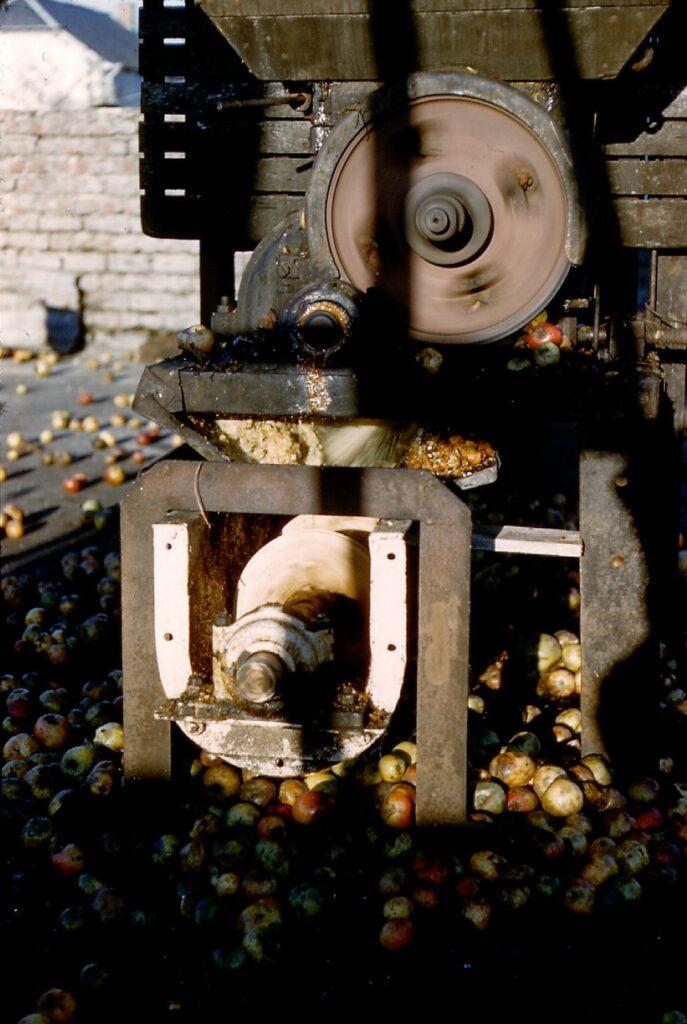 Pilage ou broyage des pommes à la cidrerie Malherbe (mairie de La Romagne, avec l'aimable autorisation de monsieur René Malherbe, maire de la commune).
