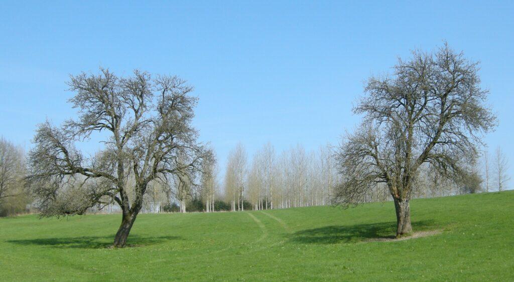 Pommiers de plein champ, repérage topographique des environs de La Romagne effectué le jeudi 15 avril 2010. Crédits photographiques : © 2020laromagne.infoparMarie-Noëlle ESTIEZ BONHOMME.